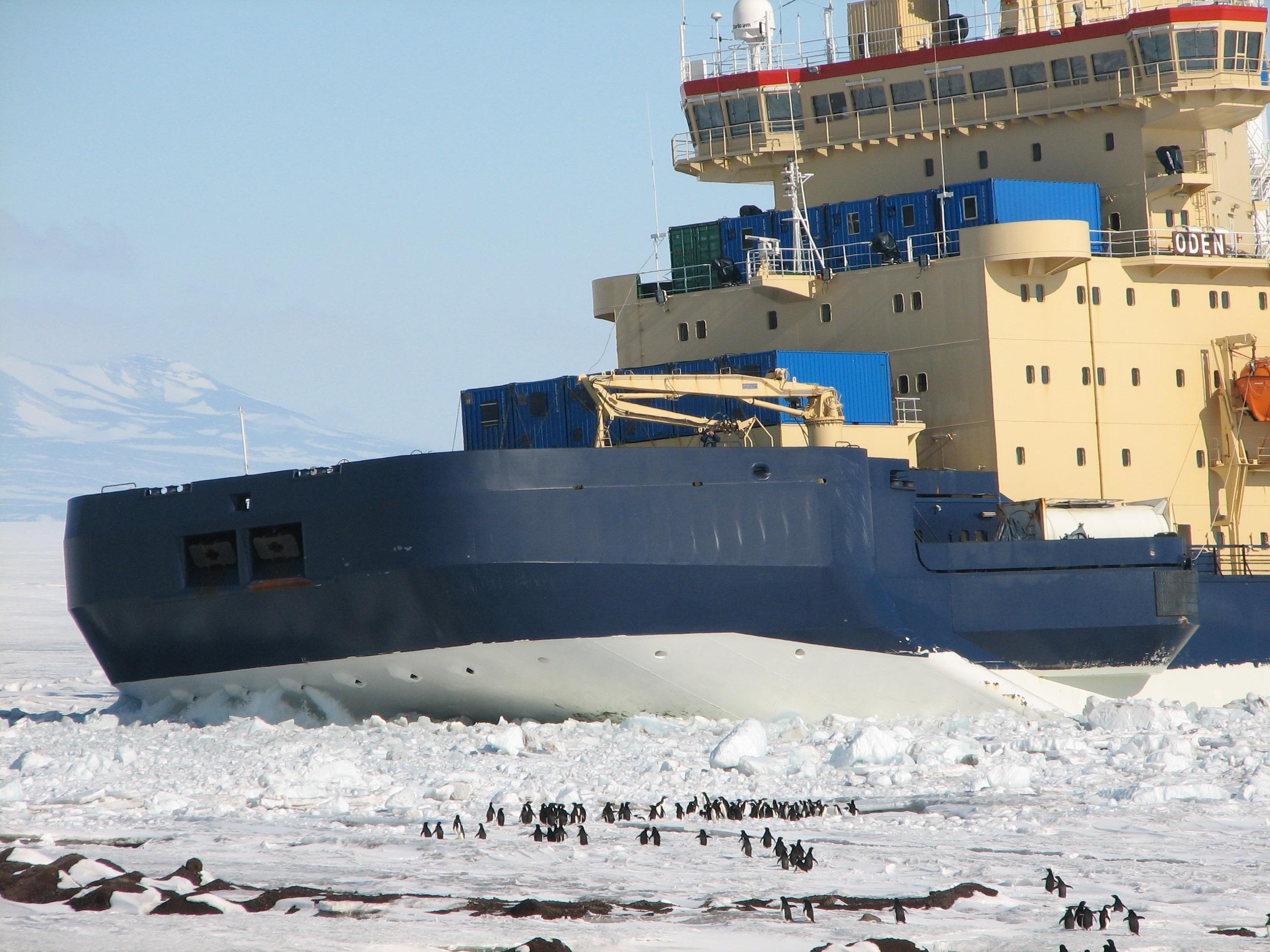 http://icecube.wisc.edu/~krasberg/pictures/2007_01_07-Penguins/2411-Penguins-Investigate-Icebreaker-IMG_2411.JPG
